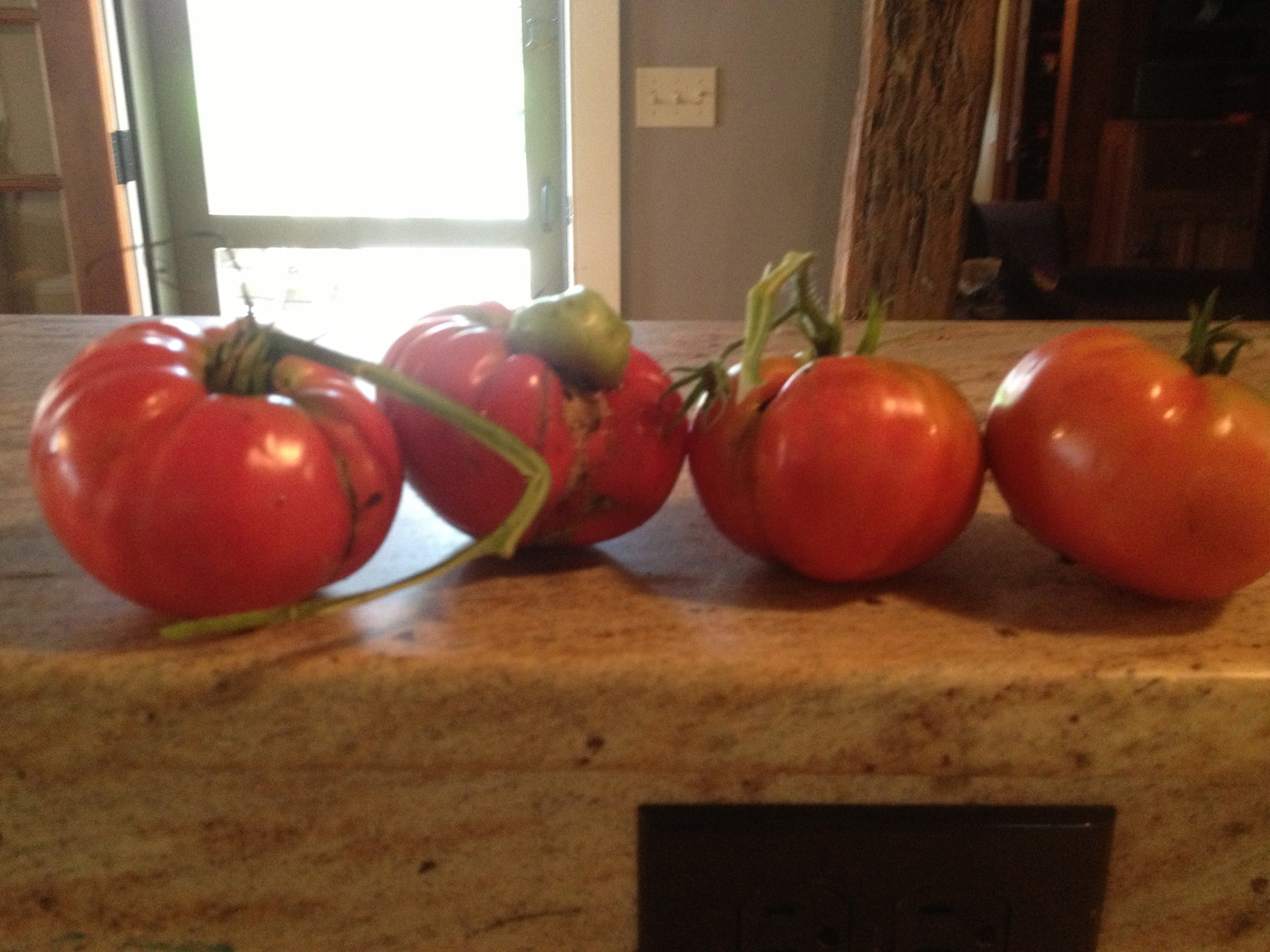 When The Last Tomato Falls